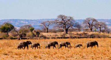 Ngorongoro Crater / Tarangire (1/2 Day Crater Tour) 2N 3D