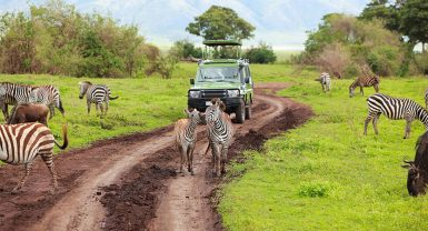 Day trip to Manyara National Park