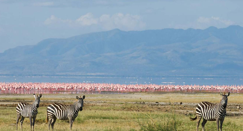 Ngorongoro Crater / Lake Manyara (1/2 Day Crater Tour) 2N 3D