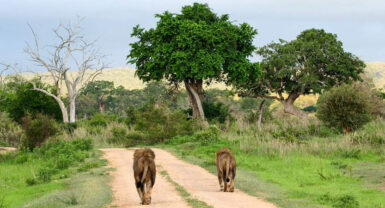 Selous Game Reserve / Mikumi National Park 4N 5D