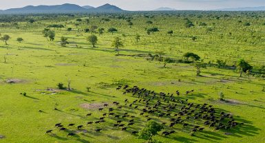 Selous Game Reserve 3N 4D
