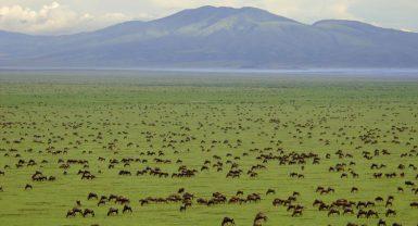 Ngorongoro Crater / Serengeti / Lake Manyara 5N 6D
