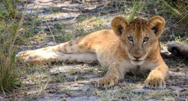 Selous Game Reserve / Ruaha National Park (6N 7D By Air)