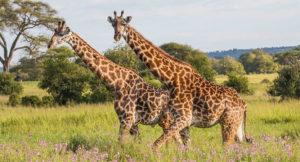 Tarangire National Park 1N / 2D